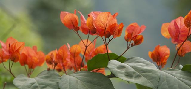 Prachtige tropische bloemen in de tuin van de villa op Bali.