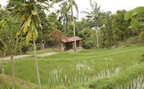 Bezoek aan een Balinees dorp.