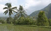 Vanuit de villa heeft u een prachtig uitzicht op de authentieke omgeving van Bali.