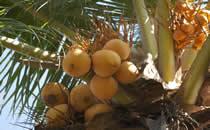 De prachtige tropische tuin van villa Bima Sena staat voor met bloemen en fruitbomen.