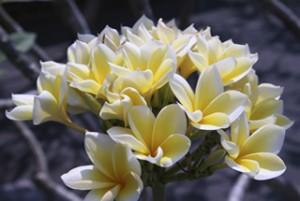 De prachtige flora van Bali.