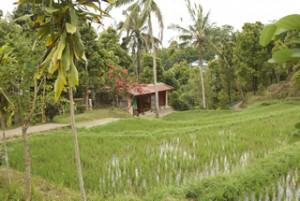 Typisch huisje op Bali.