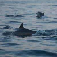 In de zee van Bali zie je de dolfijnen ronddartelen.