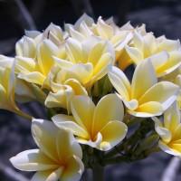 Op Bali vind je de prachtigste soorten bloemen.