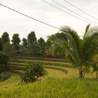 De rijstvelden op Bali liggen trapsgewijs.