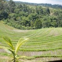 Vanaf de heuvels heb je een prachtig uitzicht over de rijstvelden op Bali.