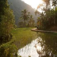 Een rijstveld helemaal onder water.
