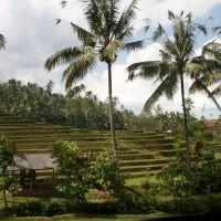 De rijstvelden op Bali lijken net trappen.